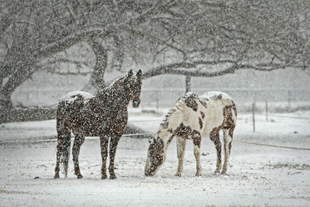 Horse in Montana snow