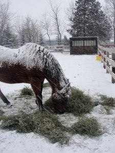 Horse Shed With Horse Eating